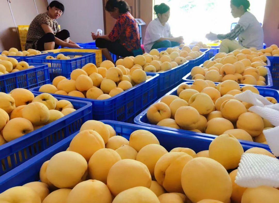 黄桃自动配重
